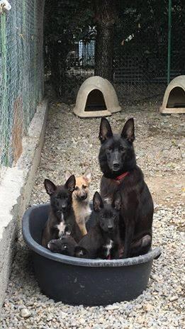 XENA et ses Bébés