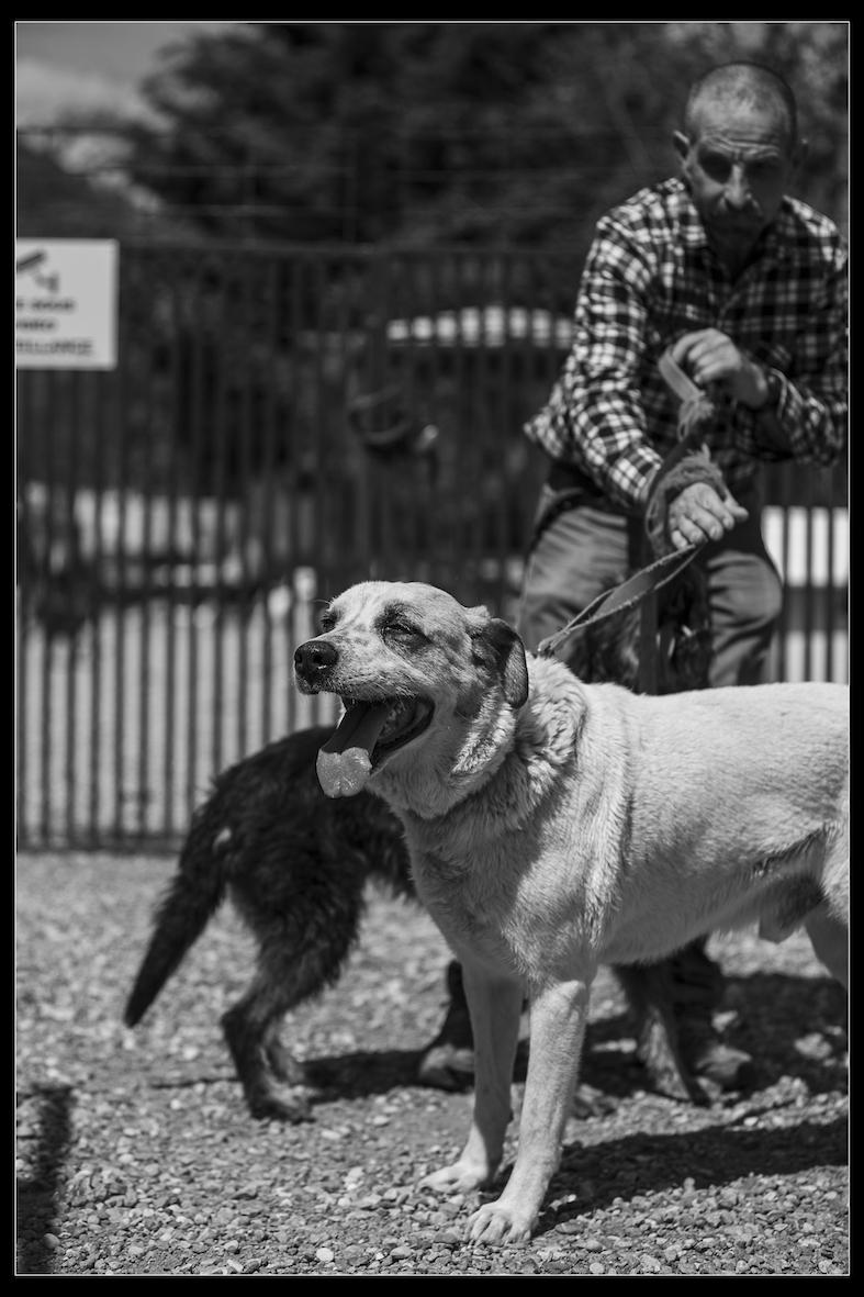 Refuge chiens coco 0733