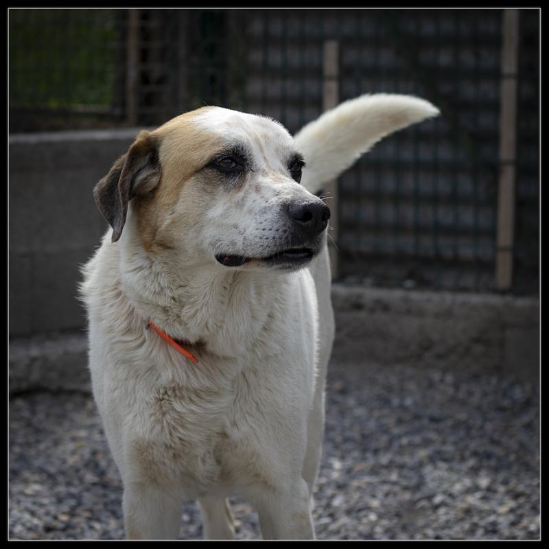 Refuge chiens coco 312