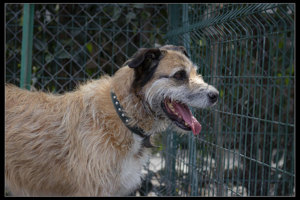 Refuge chiens lorye 285