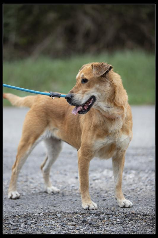 Refuge chiens roxane 371