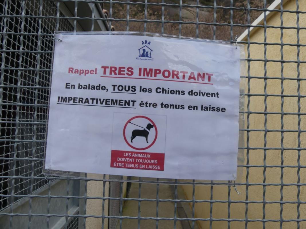 Tenir chiens en laisse